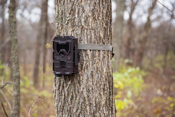 Best Wireless Trail Camera – Top Rated For 2018
