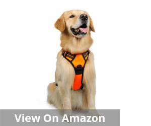 dog harness hiking
